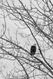 nature_Alaska_KEW_30